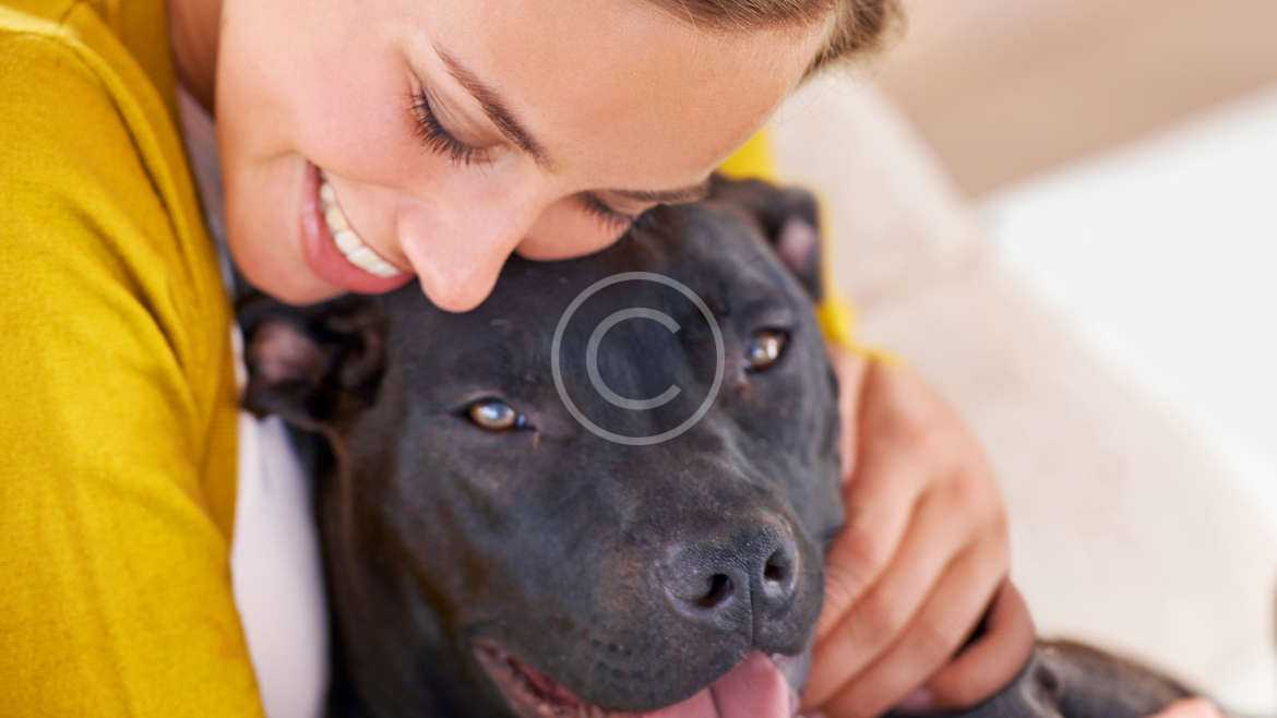 Heartworm: One Bite, One  Infection, That's Enough